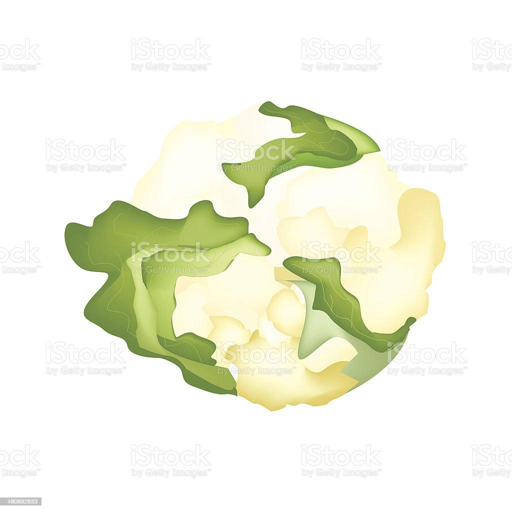 Fresh White Cauliflower royalty-free stock vector art