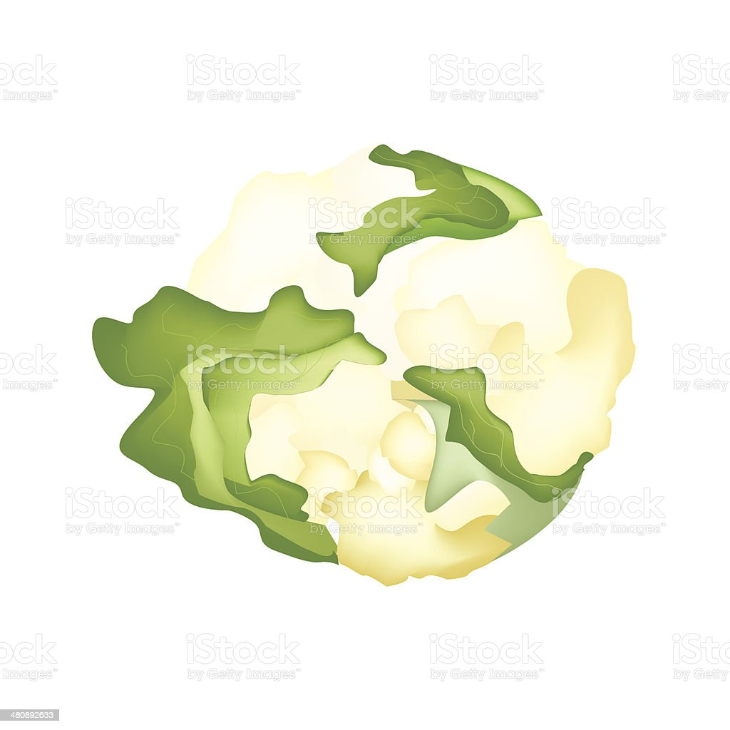 Fresh White Cauliflower vector art illustration