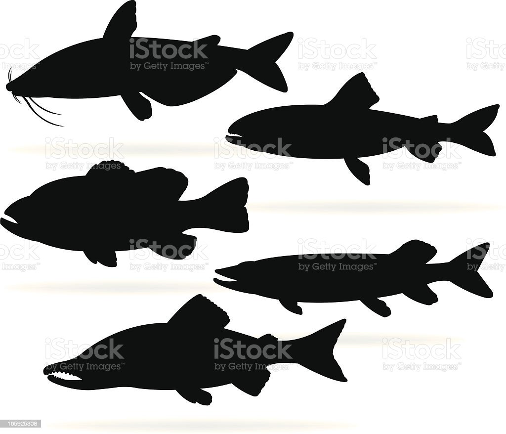 Freshwater Fish - Bass, Catfish, Trout, Salmon, Pike royalty-free stock vector art
