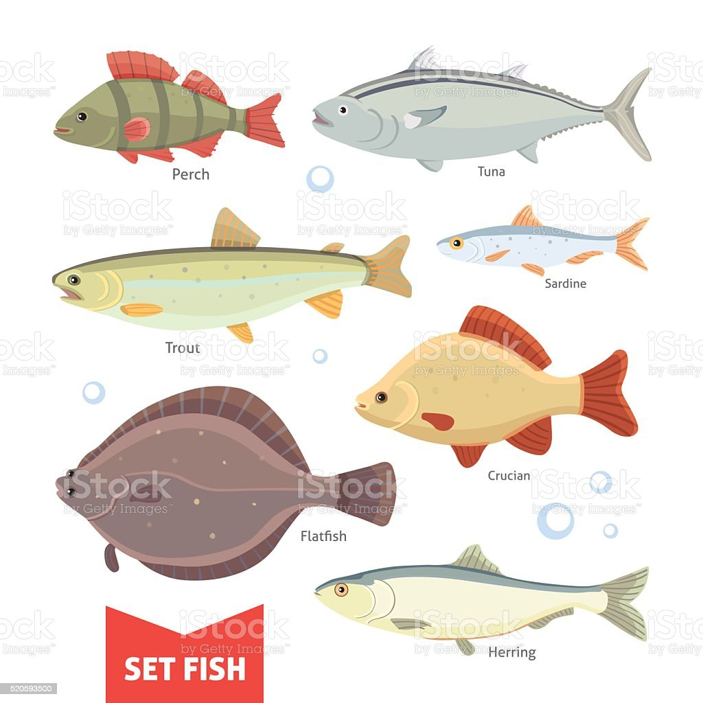 Freshwater fishes collection isolated on white background. Set Fish vector vector art illustration