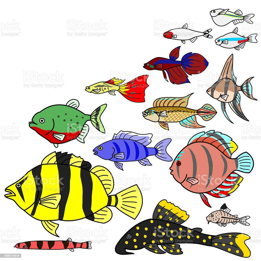 freshwater Tropical fish species vector art illustration