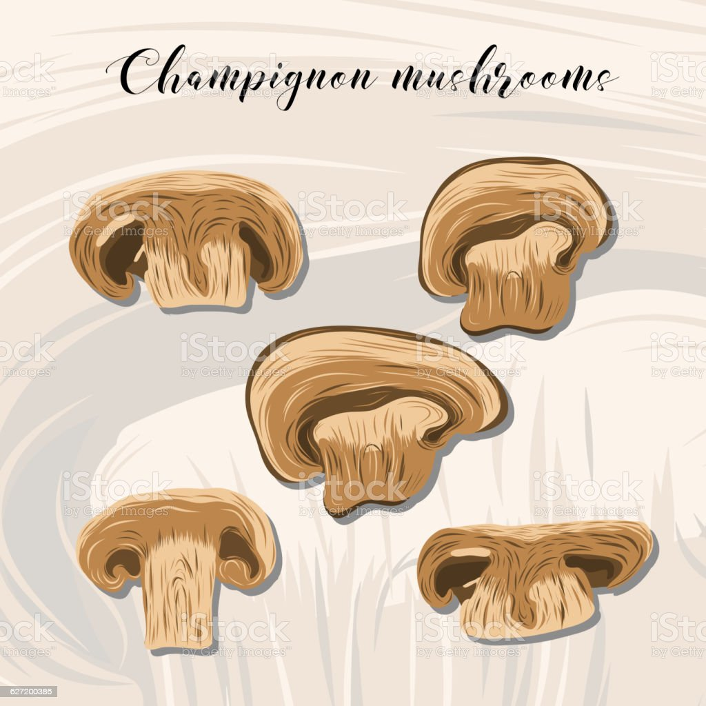 Fried champignon mushrooms on colourful background. vector art illustration