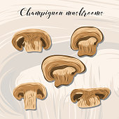 Fried champignon mushrooms on colourful background.