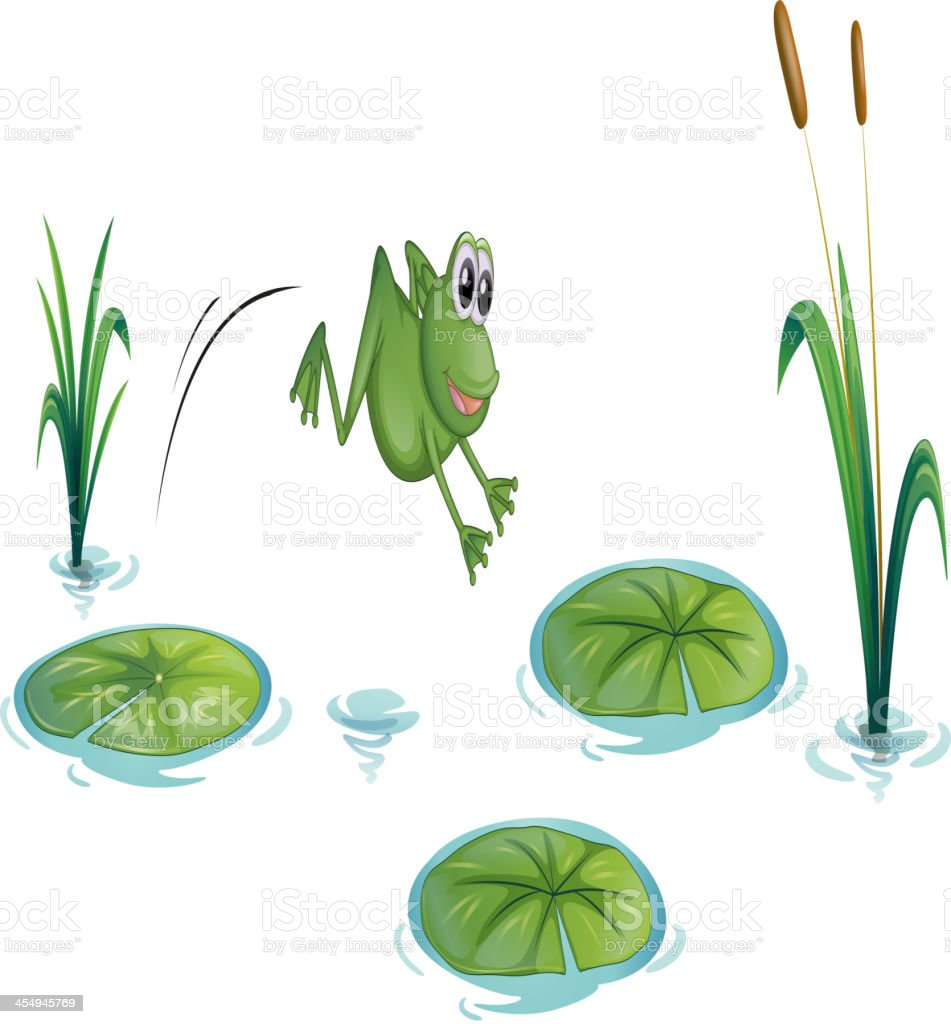 frog at the pond with waterlilies vector art illustration