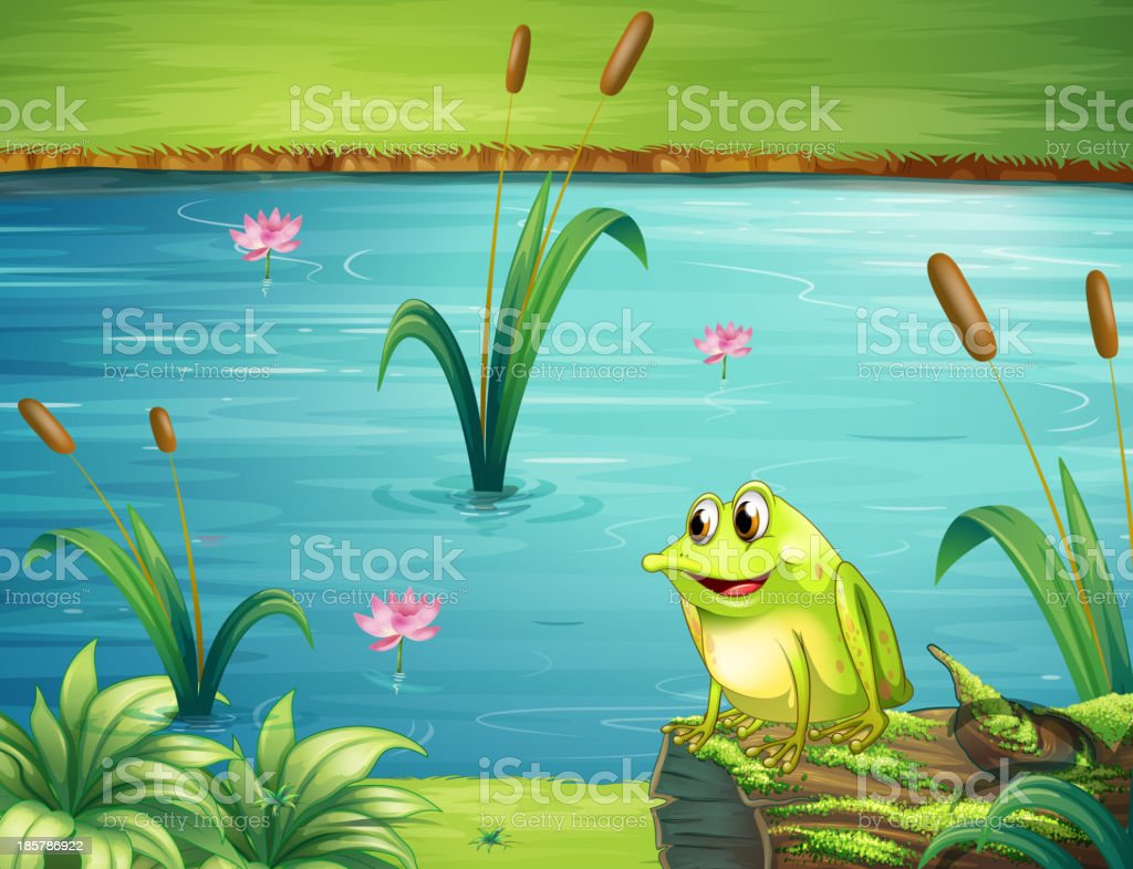 frog at the riverbank vector art illustration