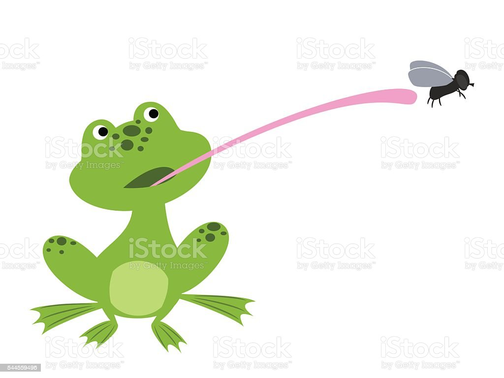 frog catching fly vector art illustration