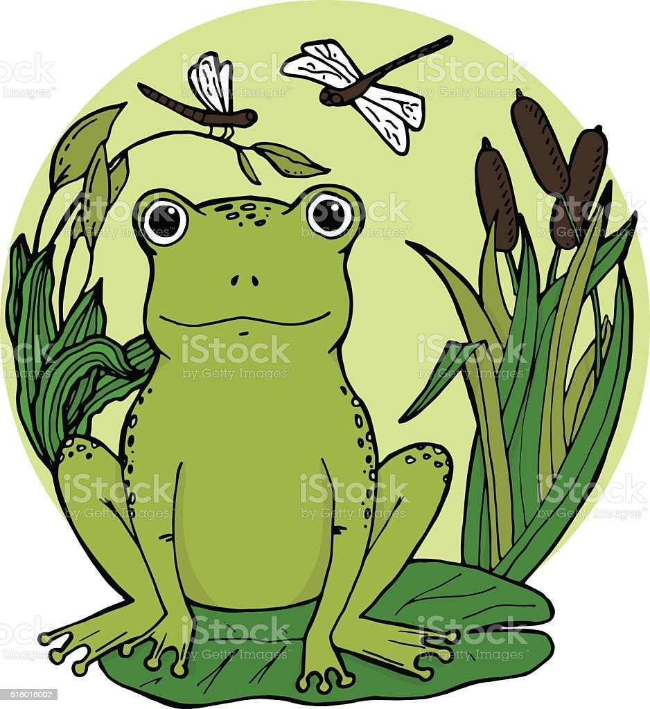 Frog in swamp at lily leaf in canes with dragonflies. vector art illustration