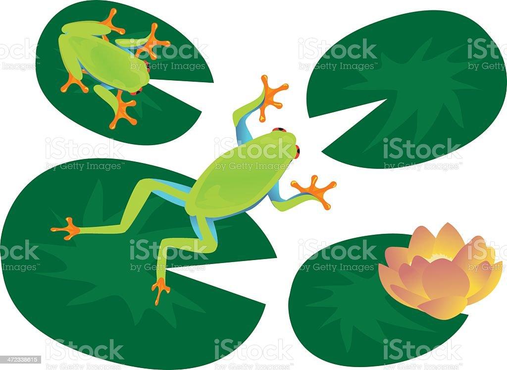 Frog Set vector art illustration