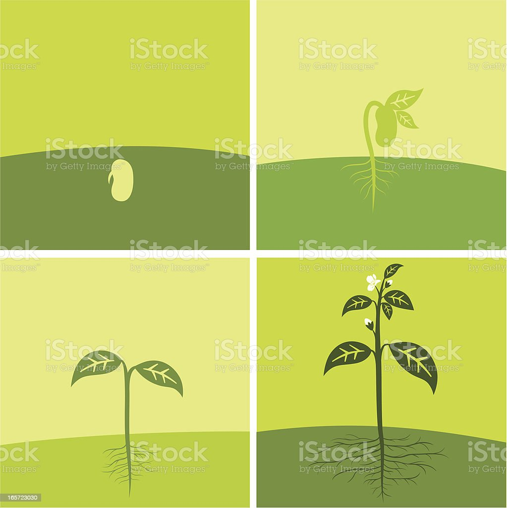 From Seed to Plant vector art illustration