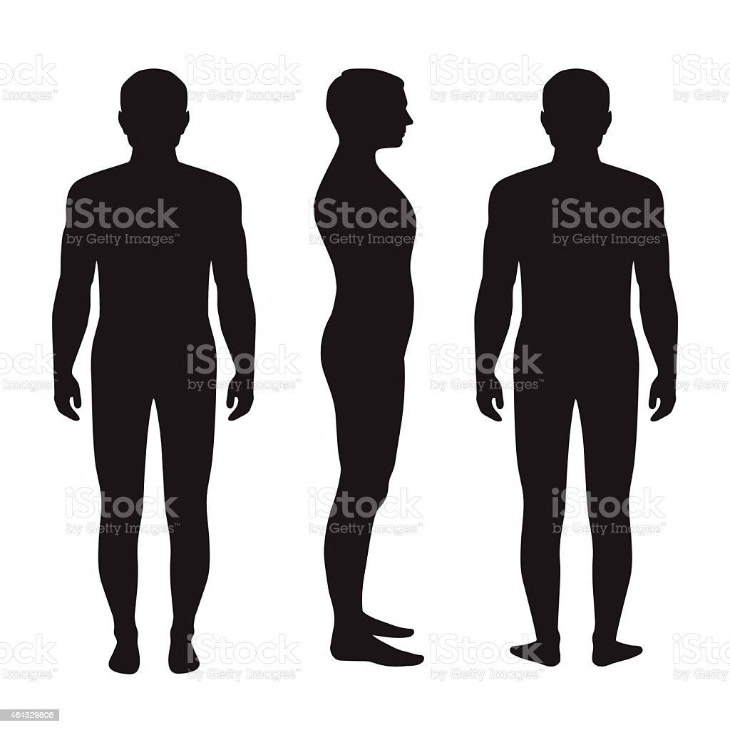 Front, side and back view silhouettes of the human anatomy vector art illustration