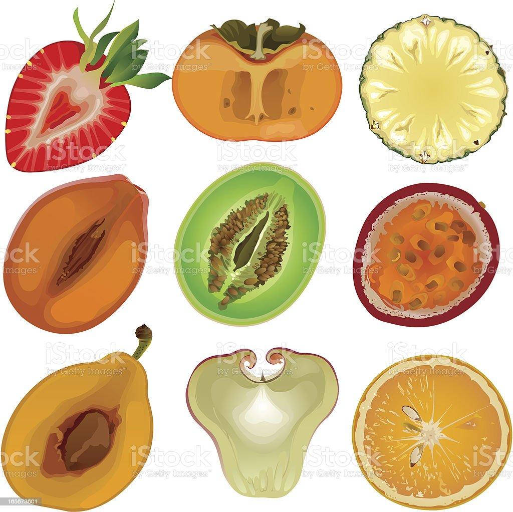 Fruit core vector art illustration
