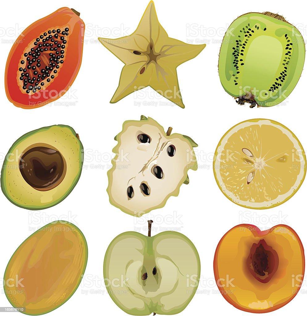 Fruit core1 vector art illustration