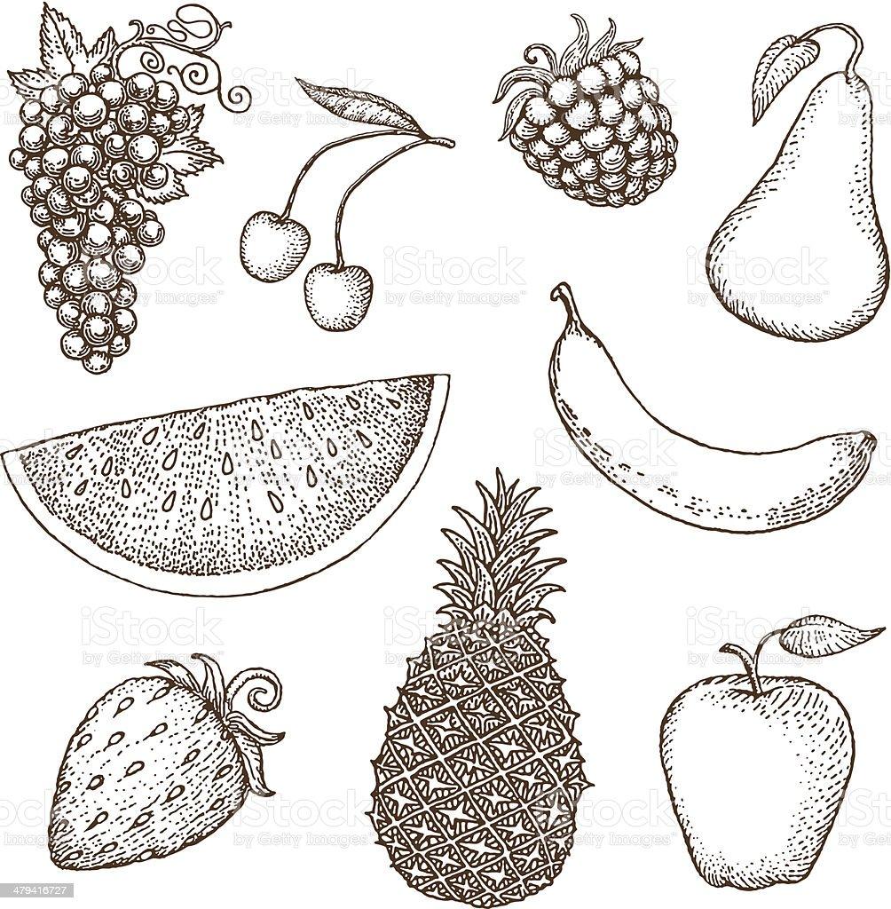 Fruit drawings vector art illustration