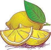 Fruit hand drawn
