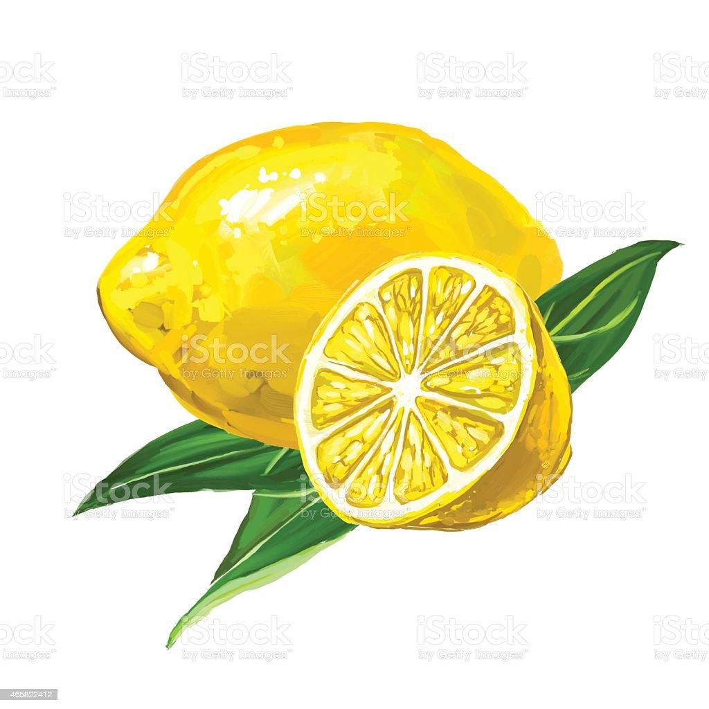 fruit lemon Vector illustration  hand drawn  painted watercolor vector art illustration