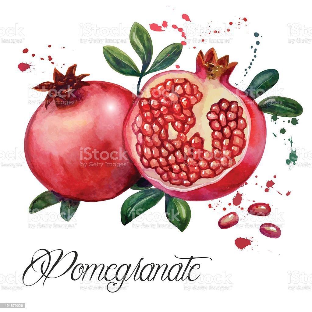 Fruit pomegranate vector art illustration