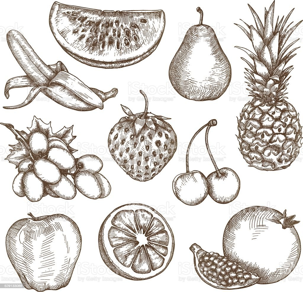Fruit, sketches, hand drawing vector art illustration