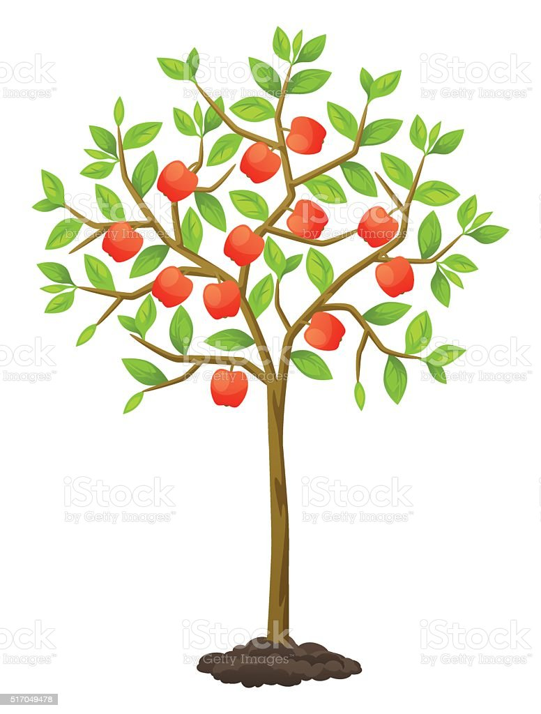 Fruit tree with apples. Illustration for agricultural booklets, flyers garden vector art illustration