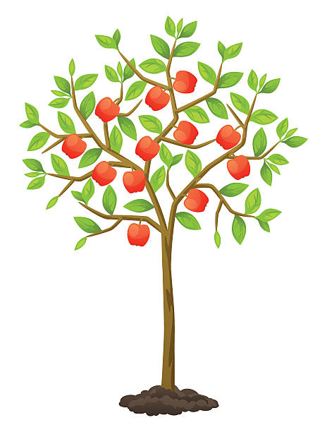 Apple Tree Clip Art, Vector Images & Illustrations - iStock