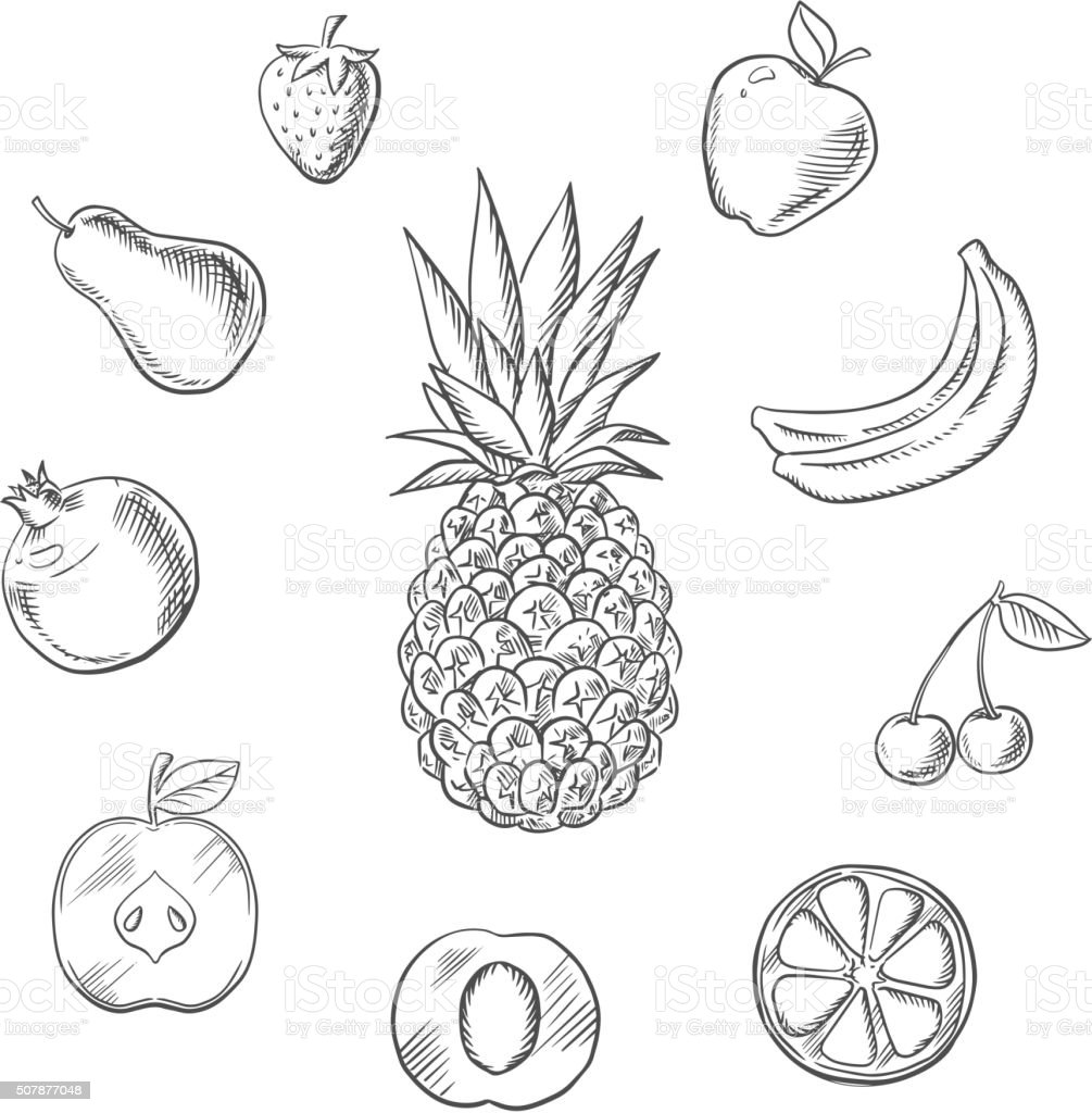 Fruits an berries sketches set vector art illustration