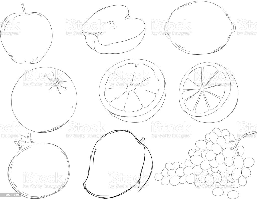 Fruits Drawings vector art illustration