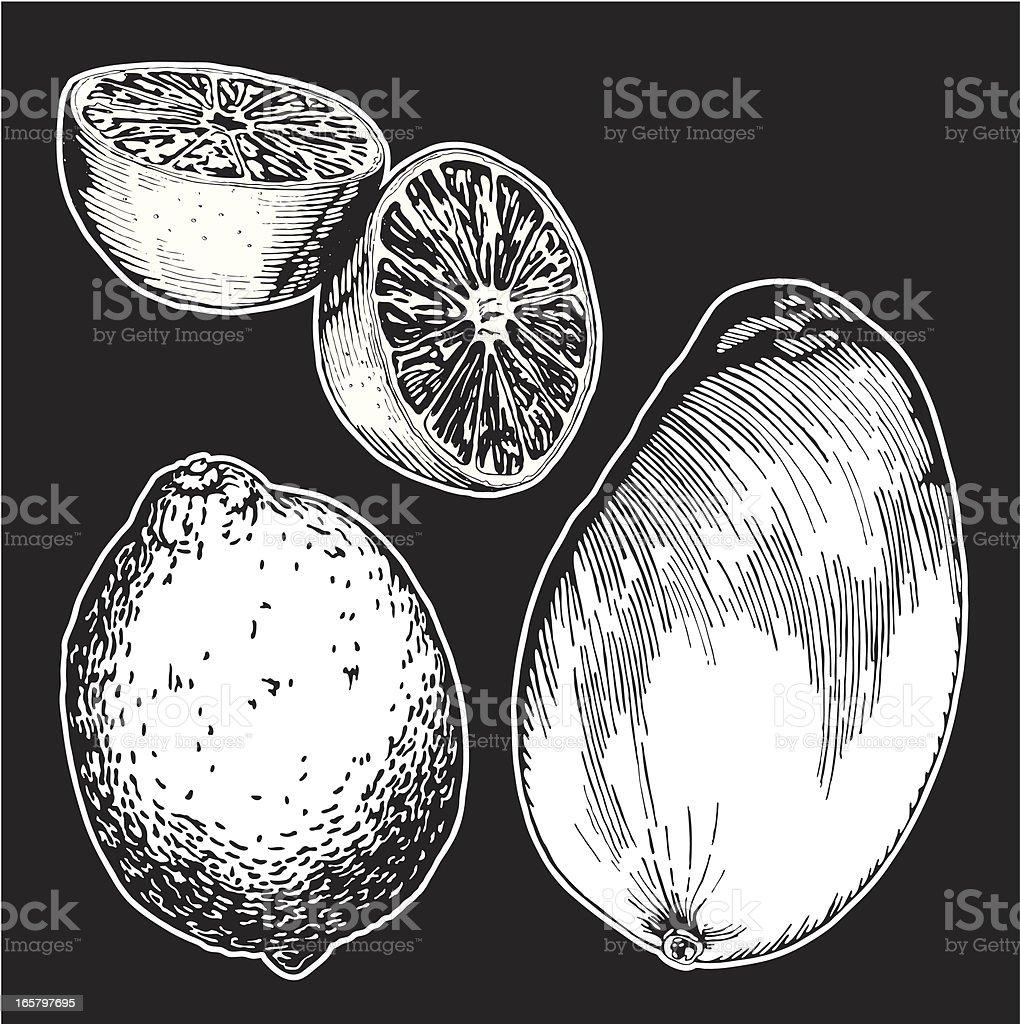 Fruits, Ink Drawing vector art illustration