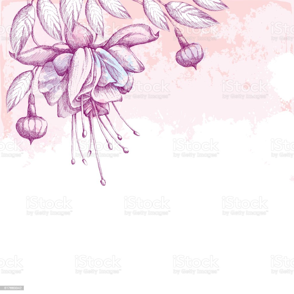 Fuchsia flower, leaves and buds on the background with blots. vector art illustration