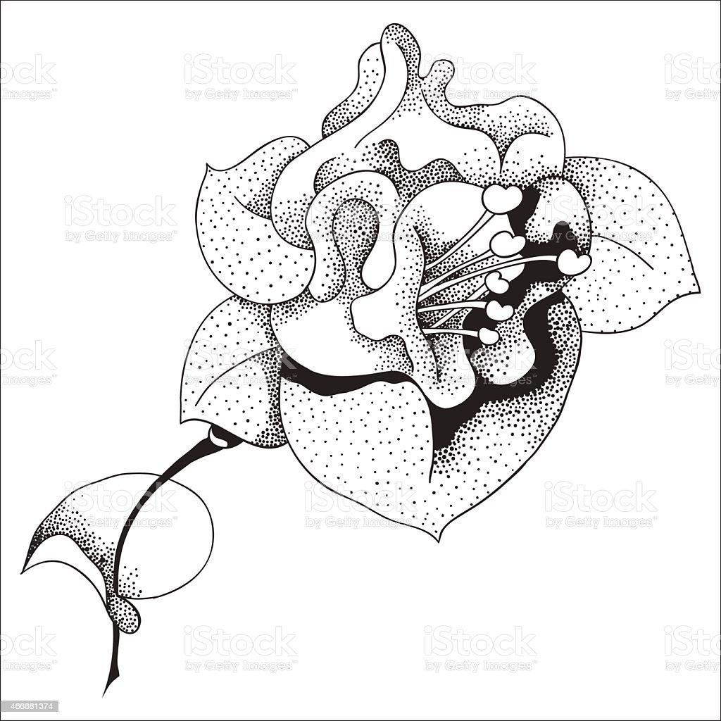 Fuchsia vector art illustration