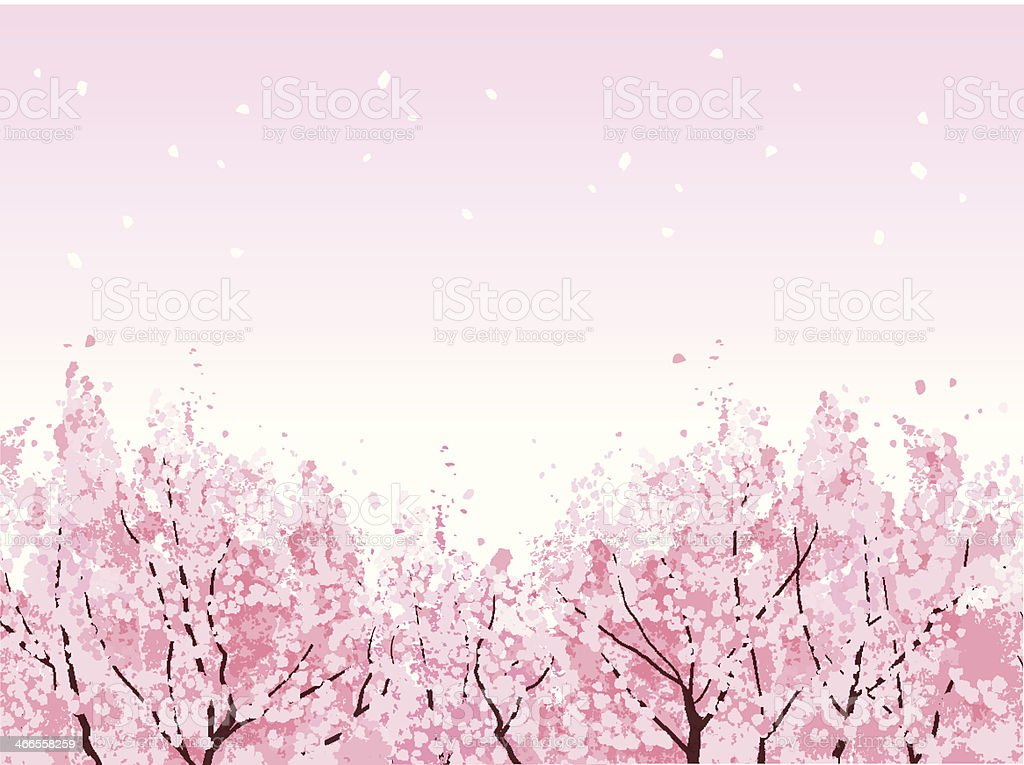 Full bloom of beautiful Cherry blossom trees vector art illustration
