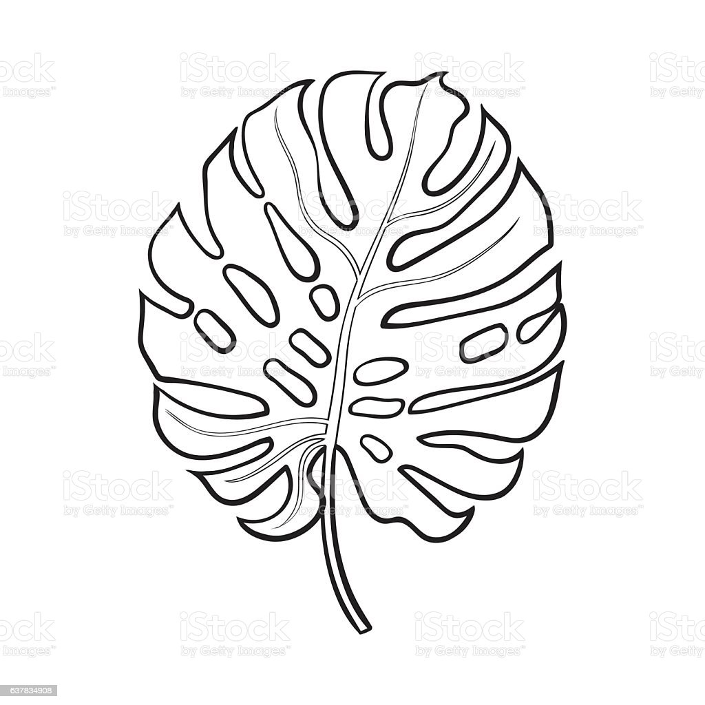 full leaf of monstera palm tree sketch vector illustration stock vector art 637834908 istock. Black Bedroom Furniture Sets. Home Design Ideas