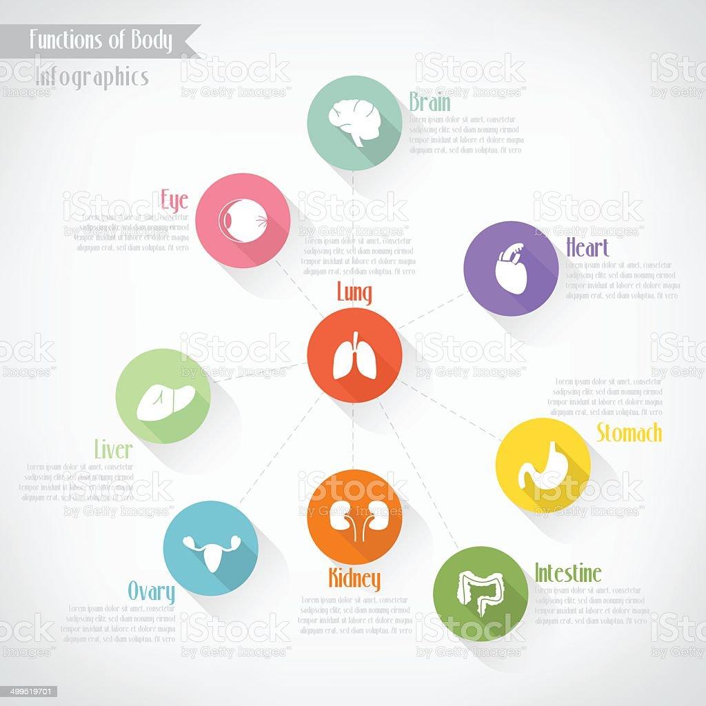 Functions of body infographics, vector eps10 vector art illustration