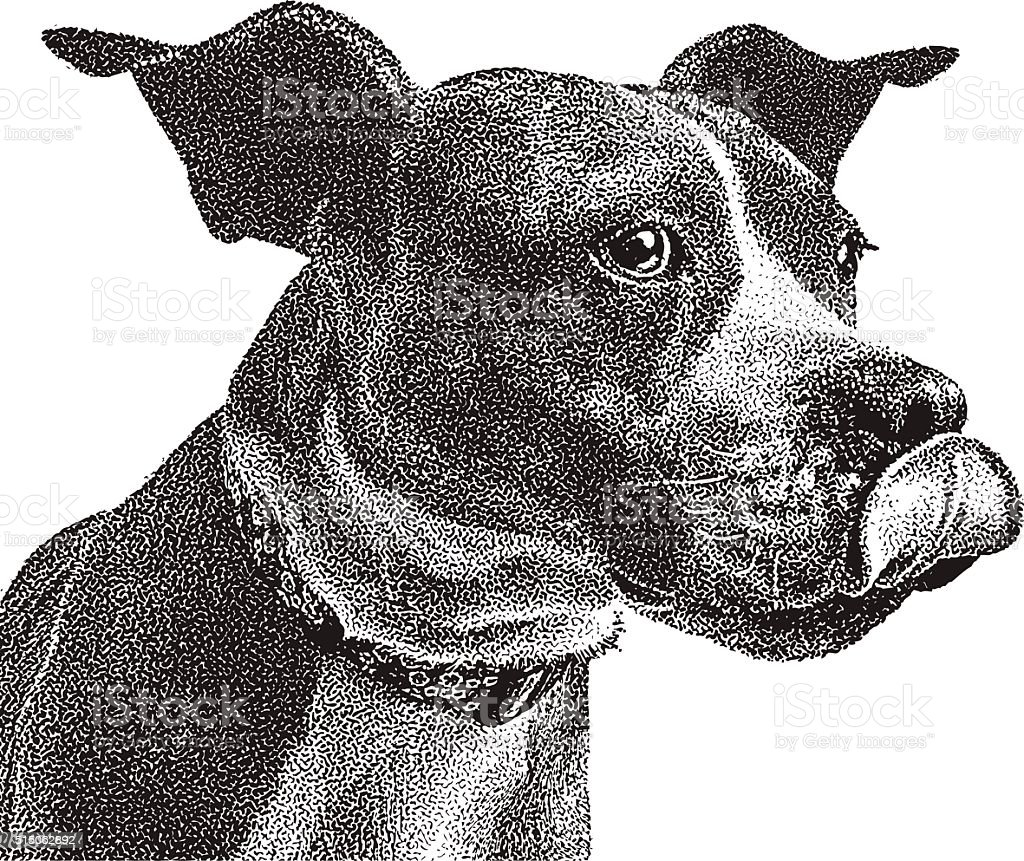 Funny Portrait of Boxer and Pit Bull mixed breed dog vector art illustration