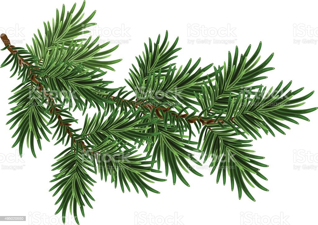 Fur-tree branch. Green fluffy pine branch vector art illustration