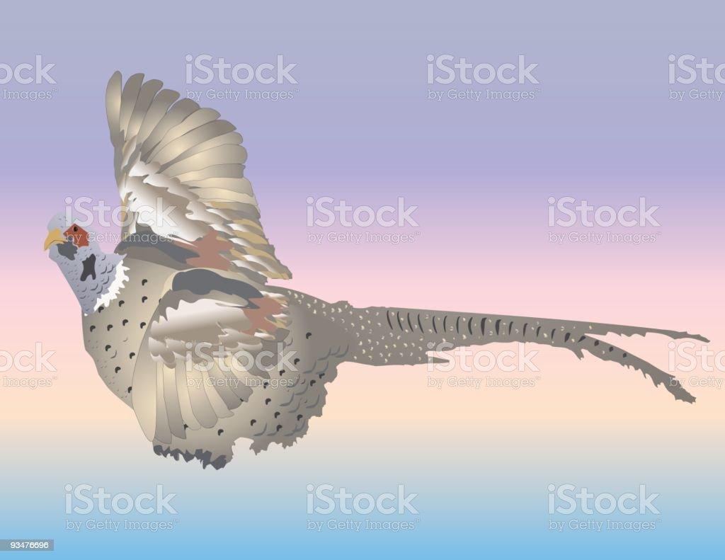 Game Bird vector art illustration