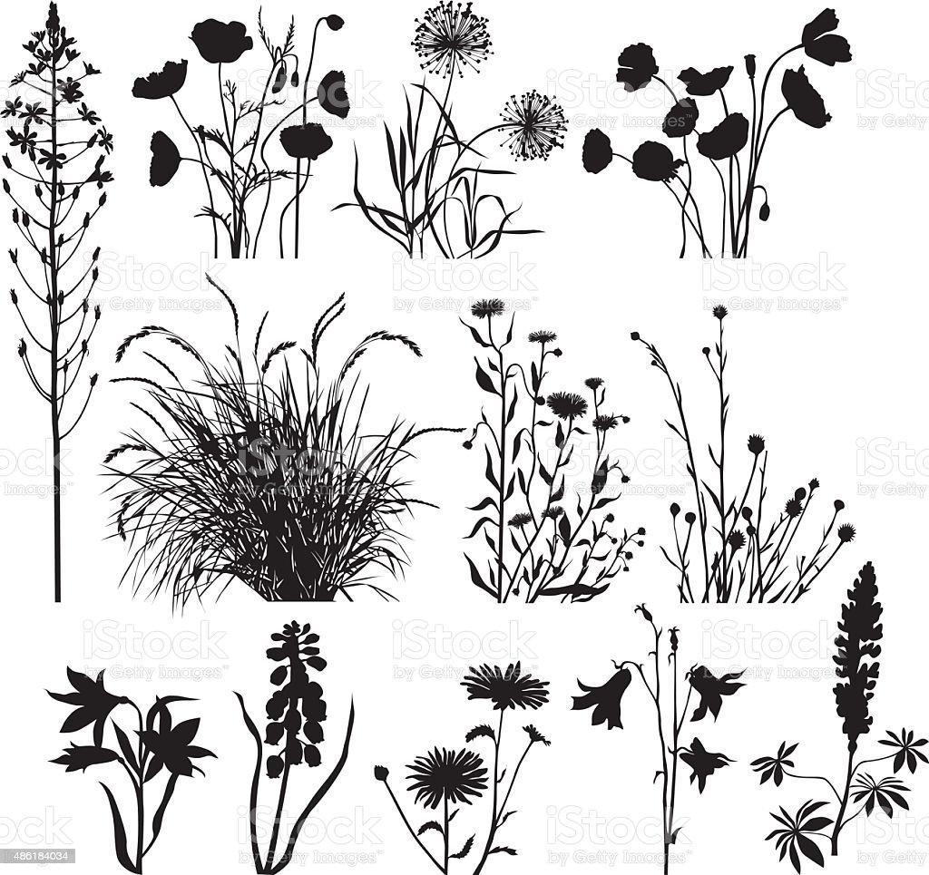 Garden and wild plants vector art illustration