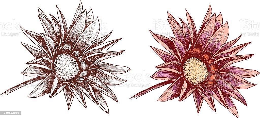 garden flower vector art illustration
