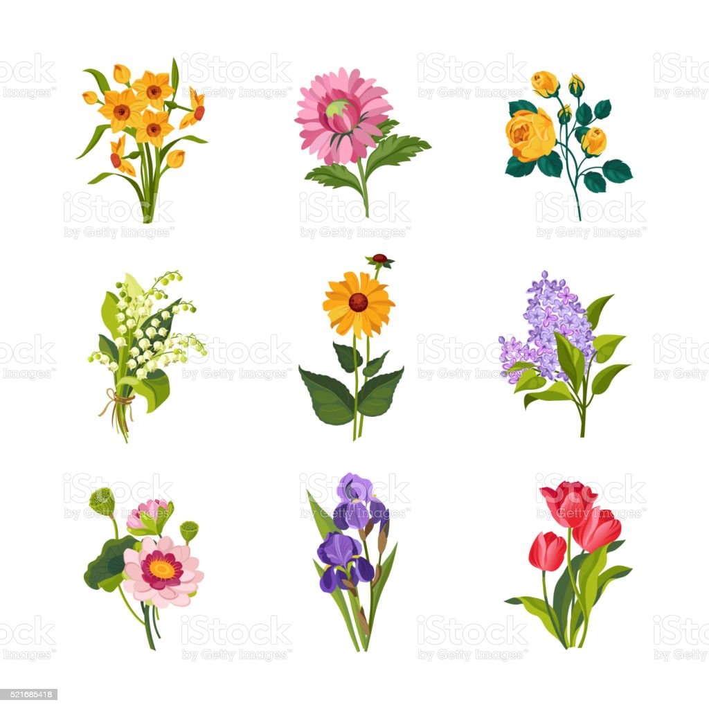 Garden Flowers Collection vector art illustration