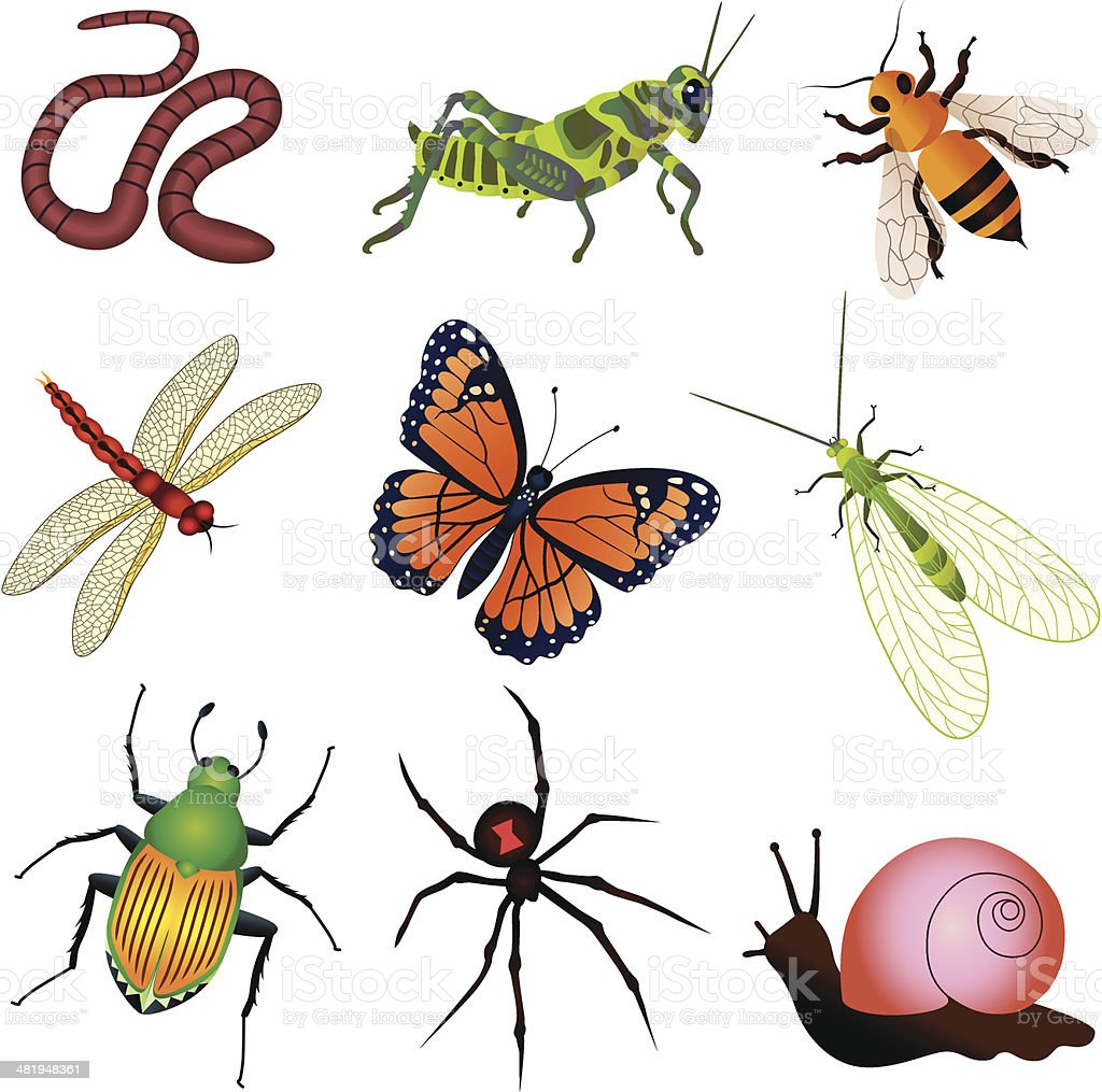 garden insects and creatures royalty-free stock vector art