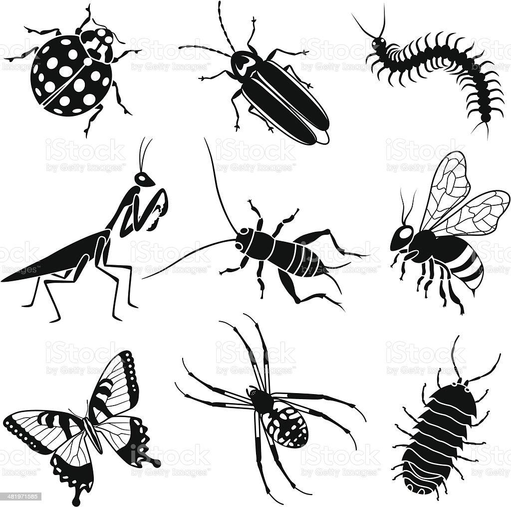 garden insects vector art illustration