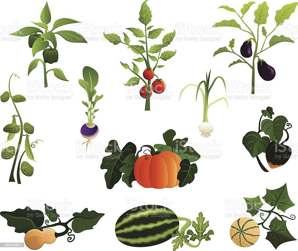 Garden Mix vector art illustration