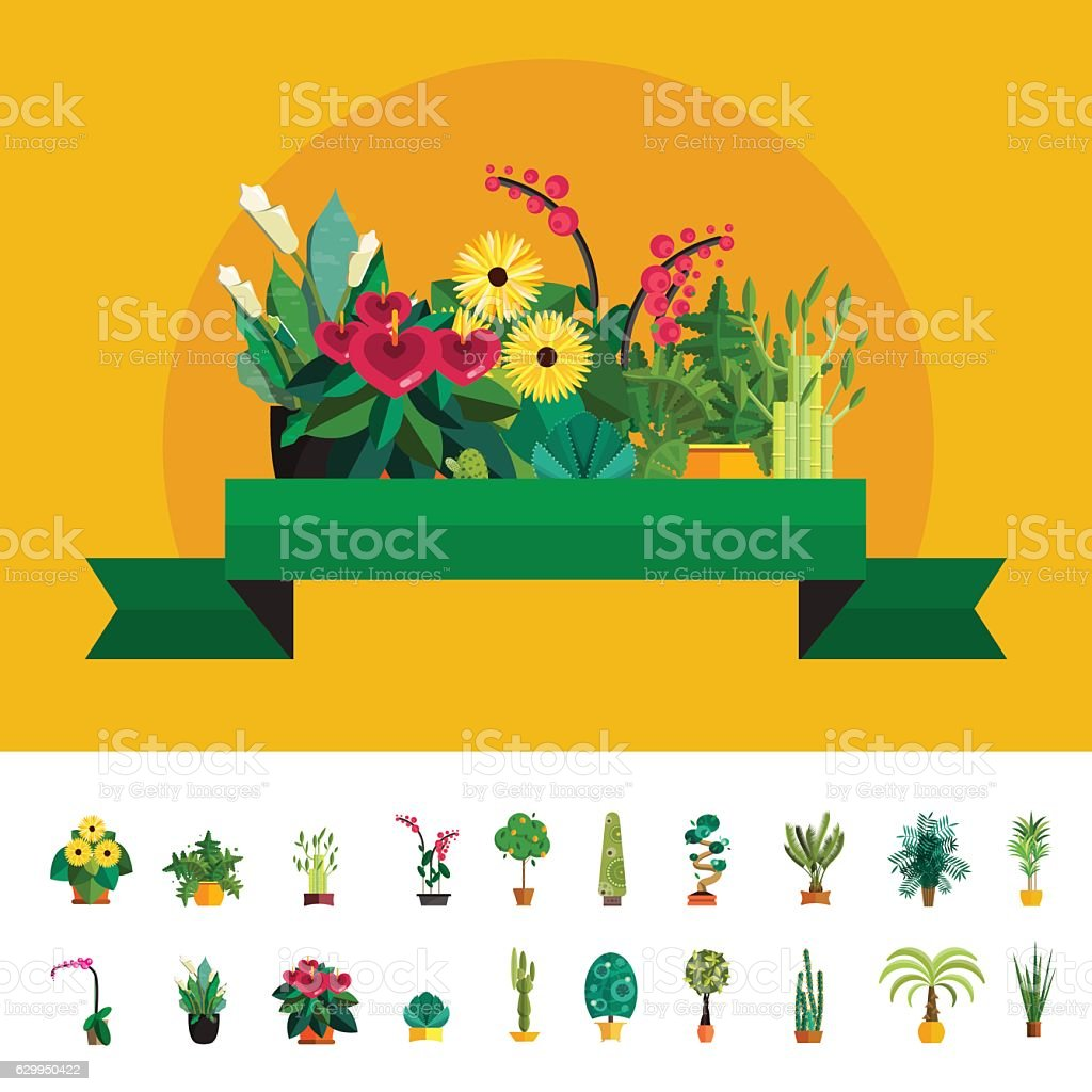 Garden plants, Potted flowers in the  vector illustration vector art illustration