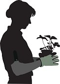 Gardener Silhouette And Strawberry Plant