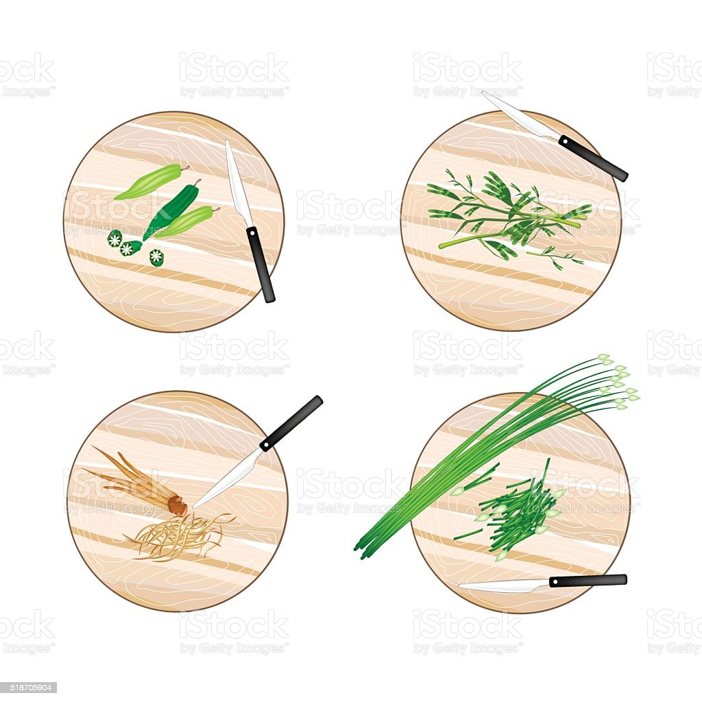 Garlic Chives, Water Mimosa, Okra and Fingerroot vector art illustration