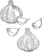 Garlic Drawing