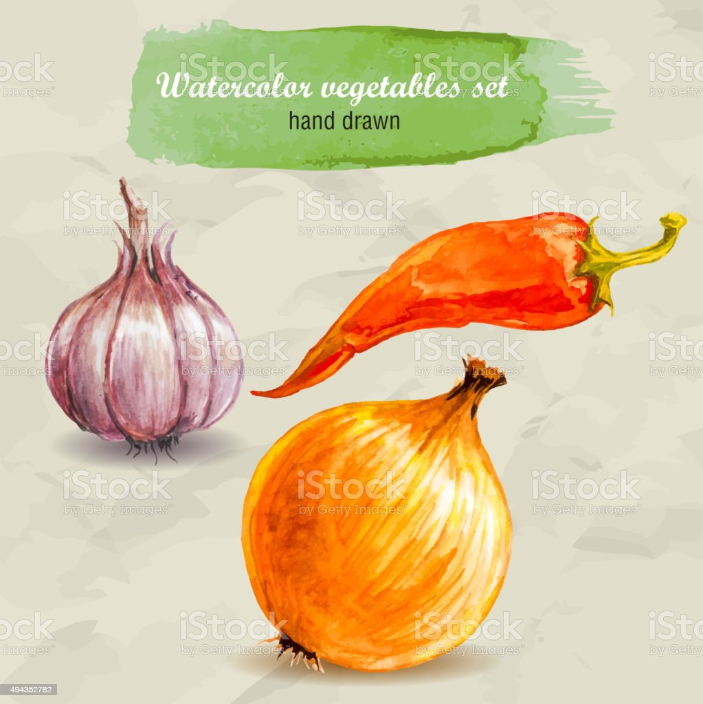 Garlic, red hot pepper and onion. Watercolor vector. vector art illustration