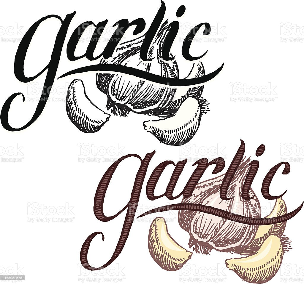 Garlic with Text royalty-free stock vector art