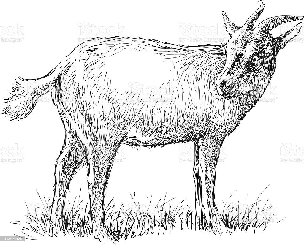 gazing goat royalty-free stock vector art