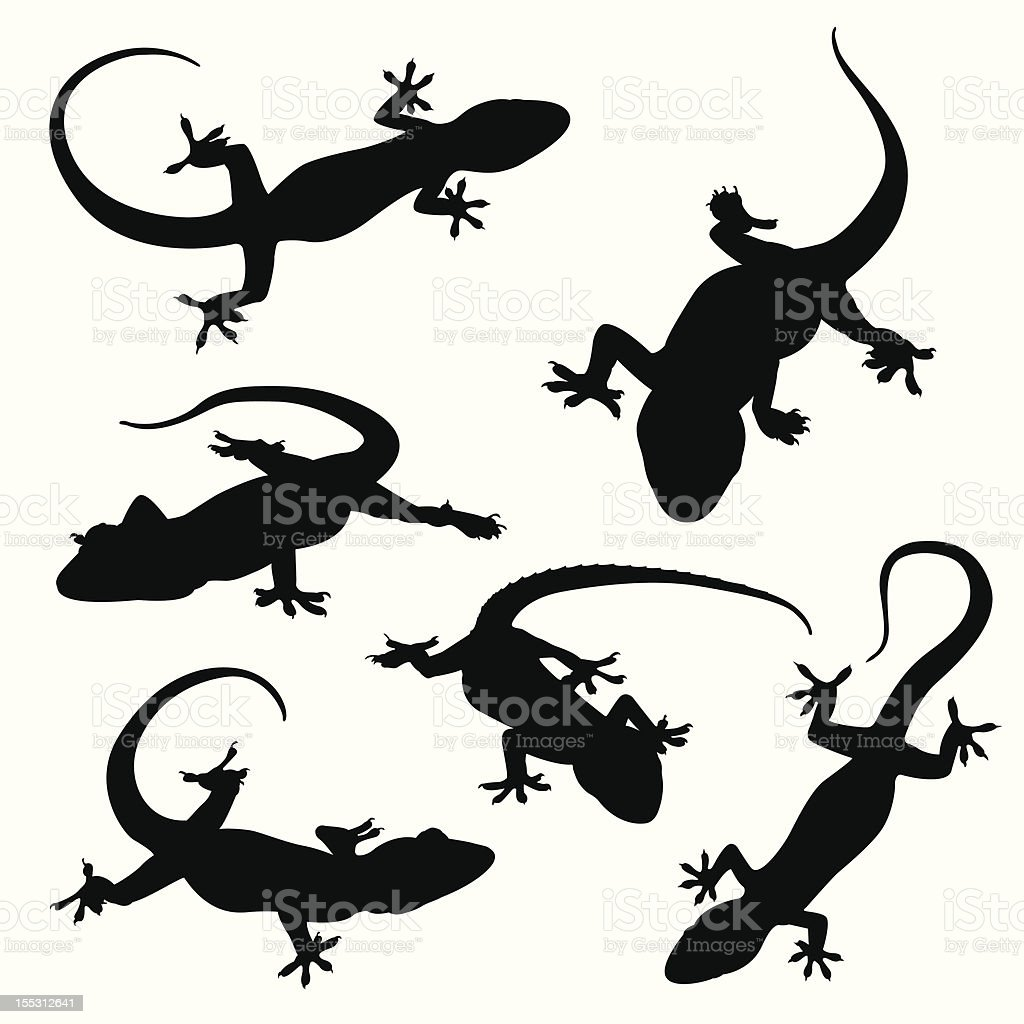 Gecko silhouettes vector art illustration