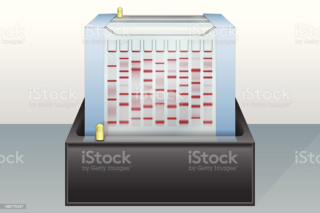 Gel electrophoresis device vector illustration vector art illustration