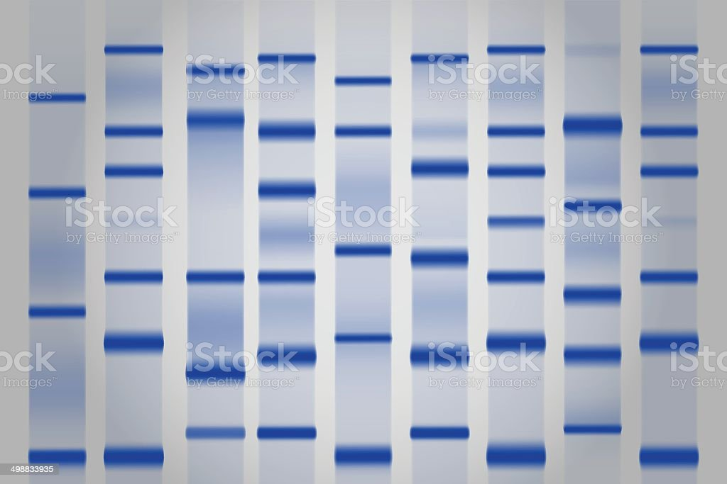 Gel electrophoresis separation electrophoretogram vector art illustration